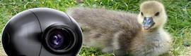 Camera Corps en la serie sobre naturaleza más ambiciosa de la BBC
