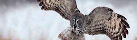 El slow-motion da vida al fondo fotográfico de WWF